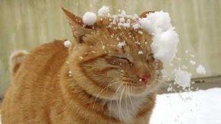 Смешные кошки - кошки 2015