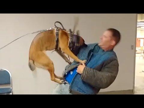 dog-training-classes-new-york-(k9-1.com)