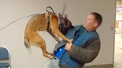 Dog Training Classes New York (K9-1.com)