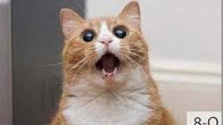 Самые смешные видео про людей и животных, приколы