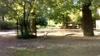 berliner zoo - die poppenden antilopen xD