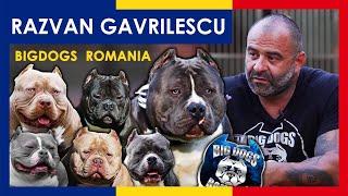 Perrera de 1 millón de dólares | La mejor perrera de American Bully | Big Dogs Rumania | ep.7