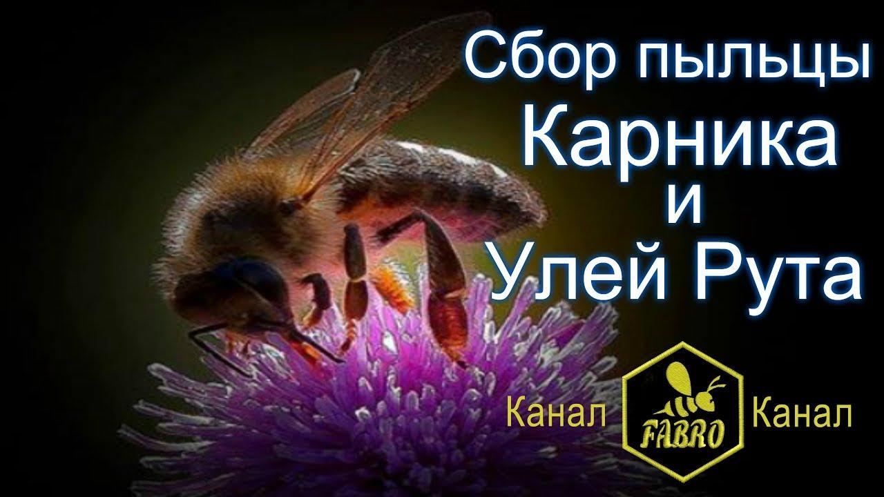 Сбор пыльцы Карника Улей Рута - Иван Фабро