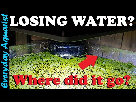 Fish Tank Water Going Down? | This May Be Why Your Aquarium Is Losing Water