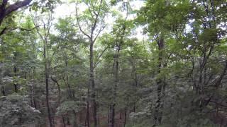 UAV Drone Flying Through The Woods DJI Phantom 2 H3-3D