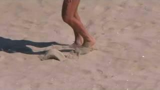 mees rannal