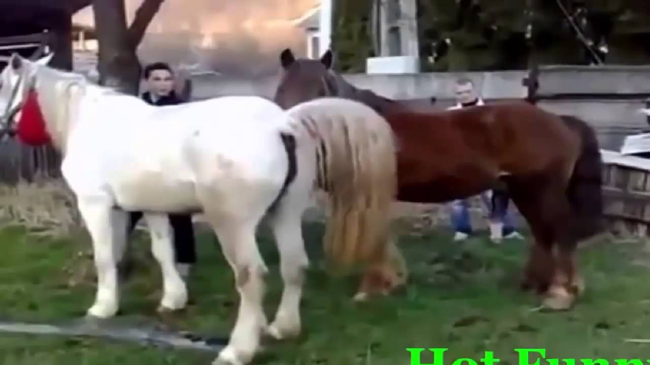 Funniest Pets of the Week Compilation August 2017 | Funny ... |Youtube Pets Funny Horses