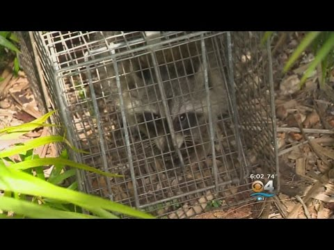 Veterinarian Claims Miami-Dade County Botched Rabies Alert