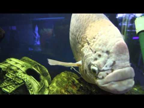 Annerley Aquarium shop walk through....