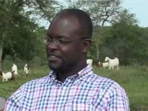 A visit to sembeguya estates goat ranch sembabule district