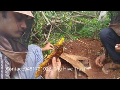 Transferring bees to the box, Bee farming in Bangalore