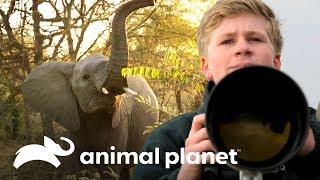Robert Irwin fotografía elefantes en África | Los Irwin | Animal Planet