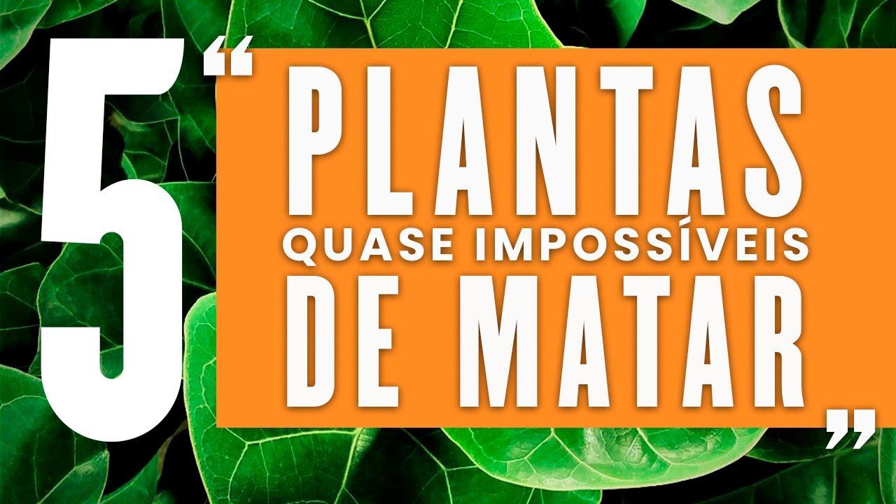 5 Plantas Quase Impossíveis de Matar.
