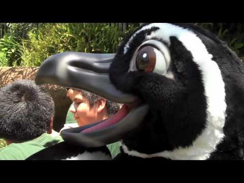 Maria the Magellanic Penguin Visits LA Zoo