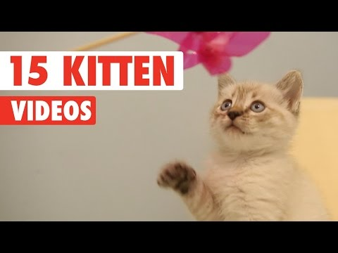 15 Cute Kittens Video Pet Compilation 2016