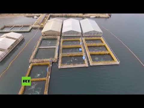 Polémica tras el descubrimiento de una 'cárcel de ballenas' en Rusia