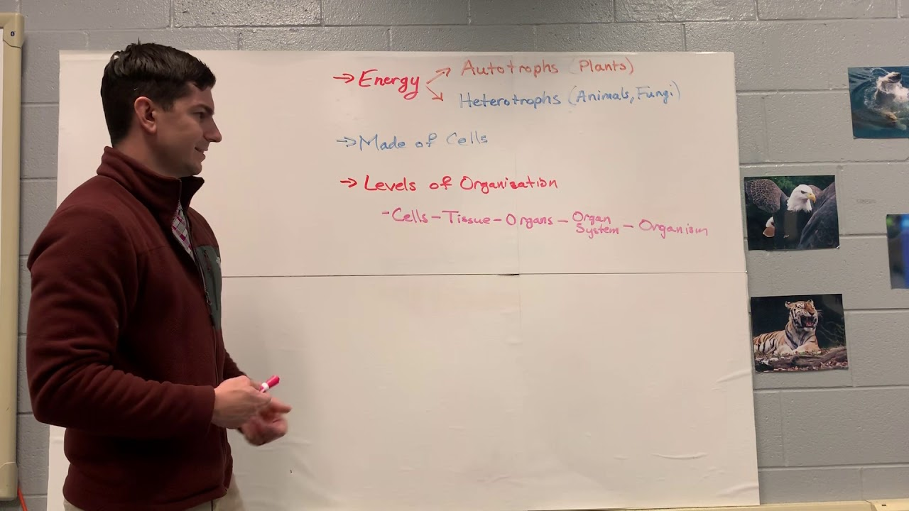 Keystone Biology Review 1 - YouTube