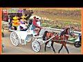 KUDA DELMAN🔴Naik Kuda Delman istimewah  Keliling Naik Delman Hias  Delman bagus  Horse