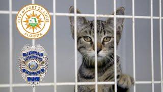Temporary Animal Shelter PSA