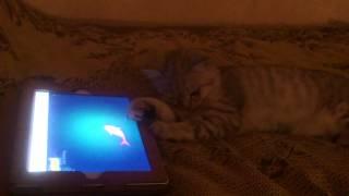 Bono's playing Cat-Fishing :з