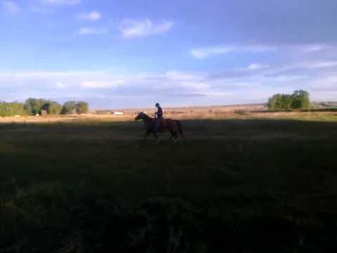 Saltness sorrel horse