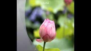 自分で撮影した写真を短い英単語で表現した動画です。