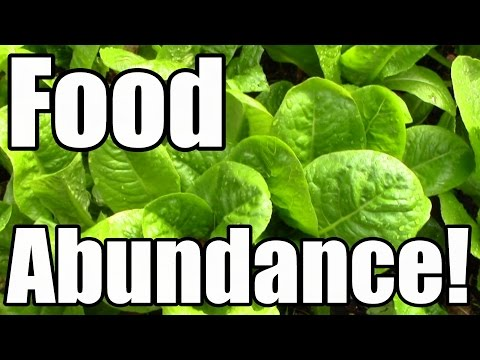 how-we-achieved-food-abundance-in-late-october-(zone-5)