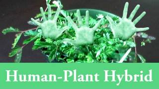 Human Plant Hybrid Genetic Engineering At Home