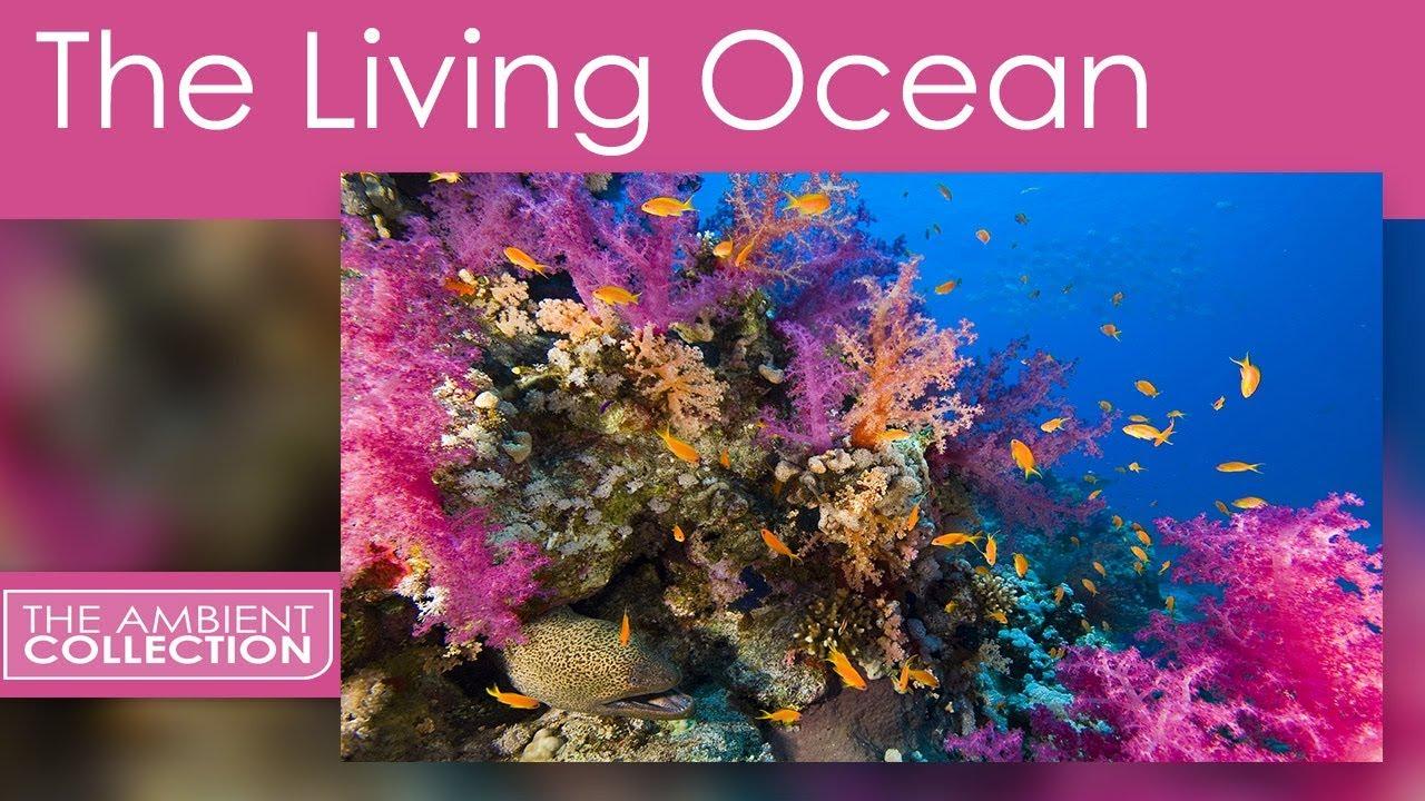 Relaxing Scenes Of The Deep Ocean - The Living Ocean - YouTube