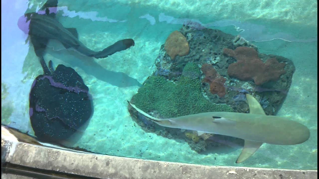 Image Result For The Aquarium Of The Pacific In Long Beach