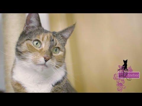 Artgerechte Katzenernährung mit catz finefood