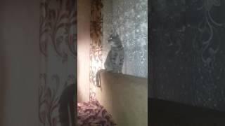 Кот луноход|У КОТА ПРАВДА СВЕТЯТСЯ ГЛАЗА!!!!!