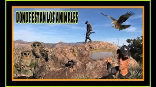 DONDE ESTÁN LOS ANIMALES PUES!!