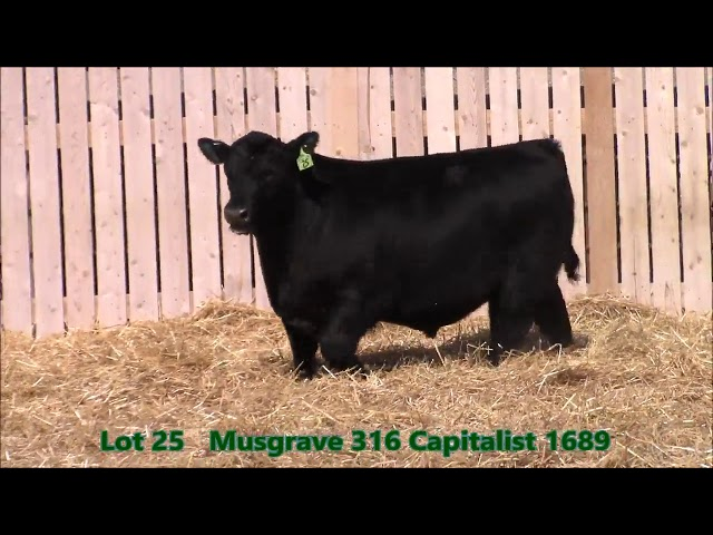 Musgrave Angus Lot 25