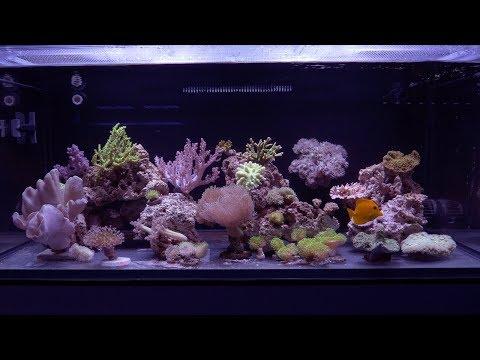 Vlog 32: Soft Coral Reef
