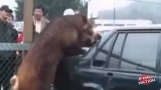 Животные атакуют! смотреть всем