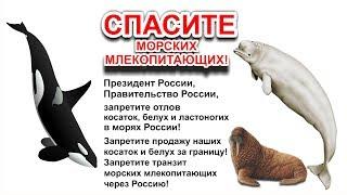 NHR | Обращаюсь к Президенту России о запрете отлова косаток, белух и ластоногих в морях России!
