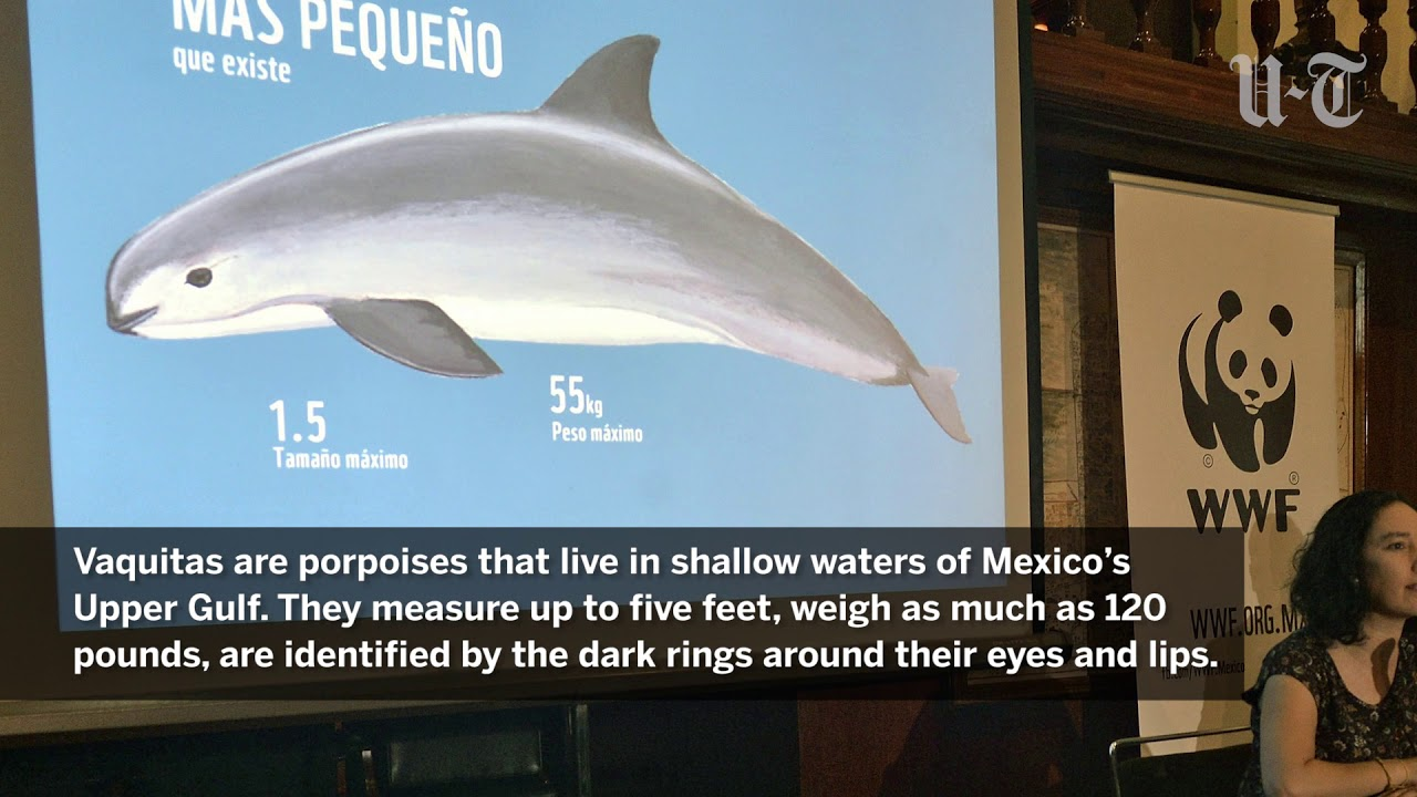 The Porpoise Given Life: Inspiration from the Cetacean Nation: hyjiqeha.ml: Chris B. Hughes: Books