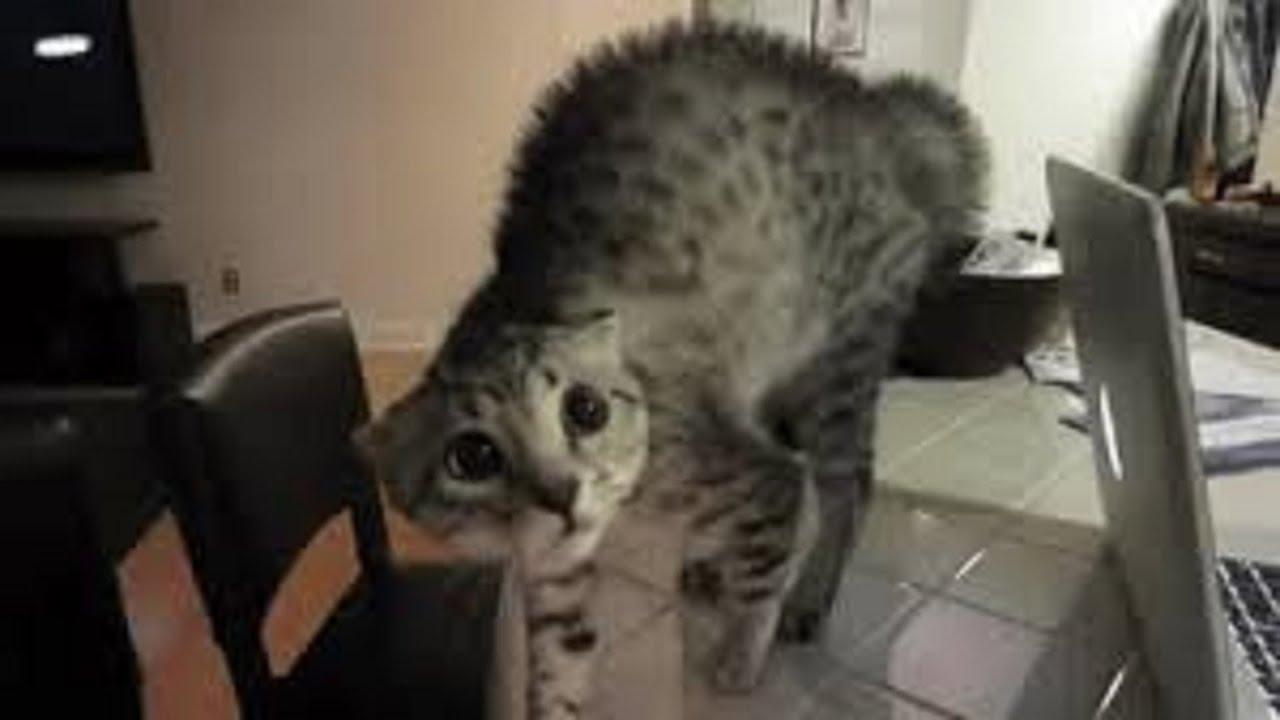 Mejores Gatos Asustados 2016 - Gatos Divertidos