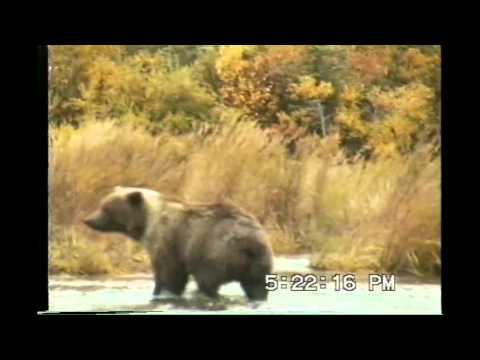 Jim & Jim Fly Fishing Brooks River Katmai National Park Alaska