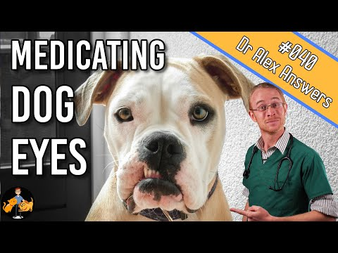 How To Give A Dog Eye Drops (when They Hate It)! - Dog Health Vet Advice