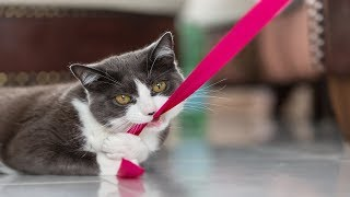 Funny CATS Videos Compilation #57