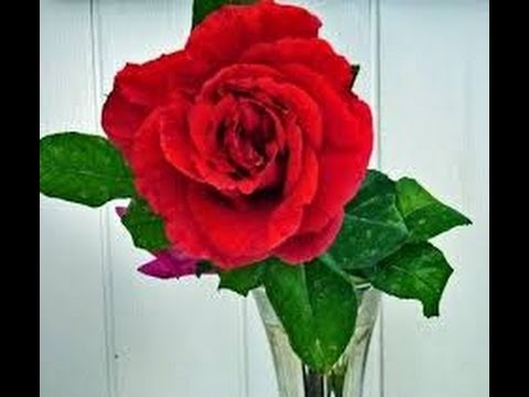 Dipingere a spatola e pennello rose rosse 1 parte youtube for Quadri con rose rosse