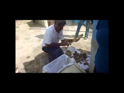 Día de Muertos en Pomuch, Hecelchakán Campeche (Limpieza de Osamentas)