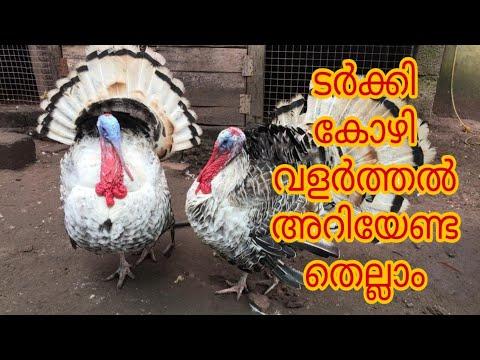 ടർക്കി കോഴി വളർത്തൽ | Turkey chicken | Turkey Bird [Agri Tech Media]