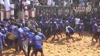 Vadipatti Jallikattu Madurai 2017(Kombu Vacha Singamdaa)