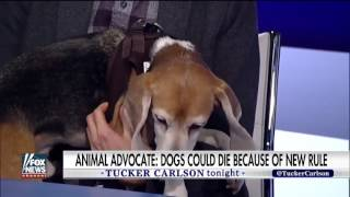 [ Tucker Porn ] USDA putting human privacy before animal safety