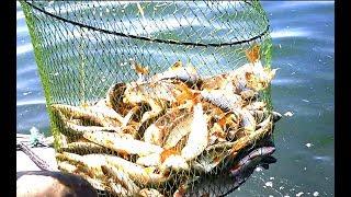 Видеоотчет о рыбалке 16.06.18.  Озеро Плещеево