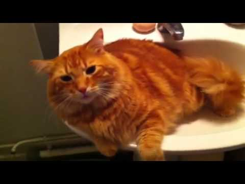 mon gros chat roux patapouf et son lavabo my big red cat in his sink youtube. Black Bedroom Furniture Sets. Home Design Ideas