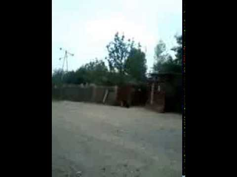 AGDAM rayonu CEMMENNI KENDI 2013